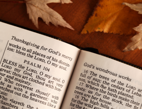 25 Psalms of Praise and Thanksgiving (FREE Printable Reading Plan)